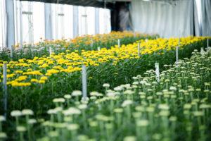いいマムの日 花市場